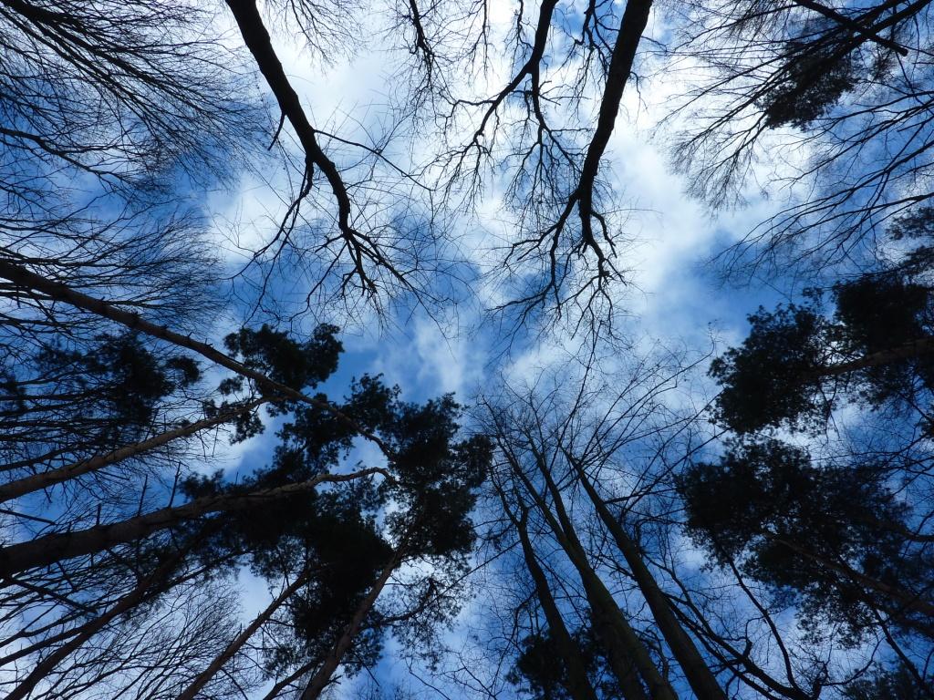 ... in den Himmel wachsen ...