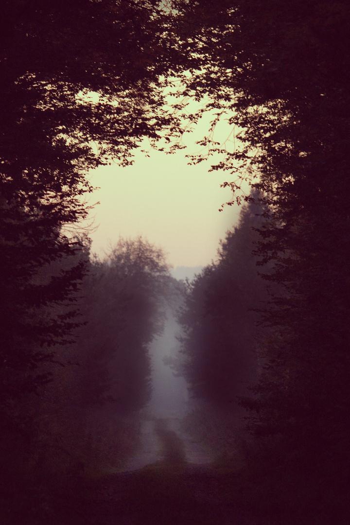 in den Nebel...