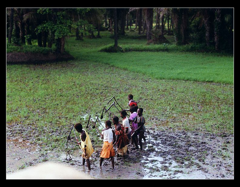 In den Reisfeldern arbeitende Kinder