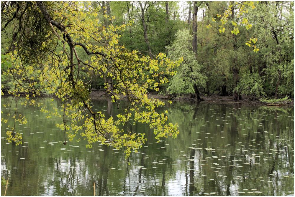 in den Rheinauen...
