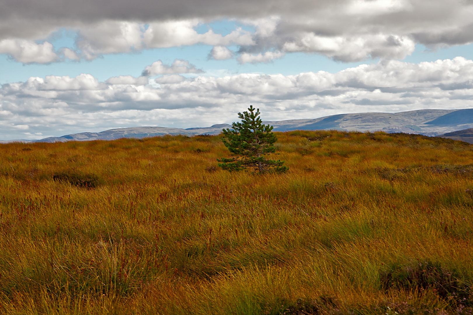 In den schottischen Highlands 2