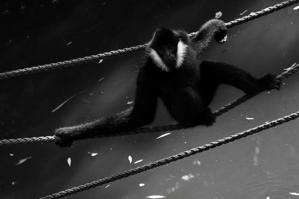 in den Seilen hängen