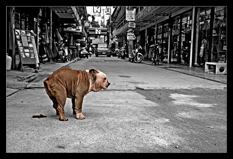 In den Straßen Koh Phangans