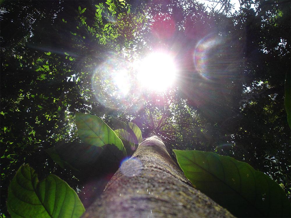 In den unendlichen Urwald