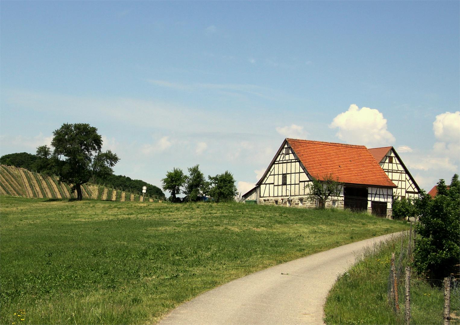 In den Weinbergen um Heuholz ( Renzen )