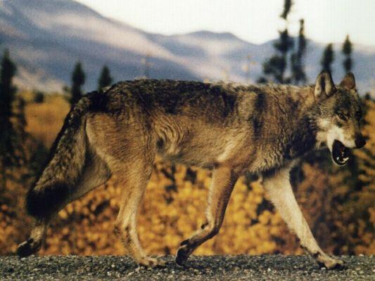 In den Yukon-Territories...