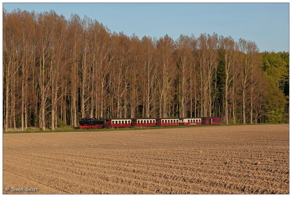 In der Abendsonne an einem Kartoffelfeld bei Heiligendamm