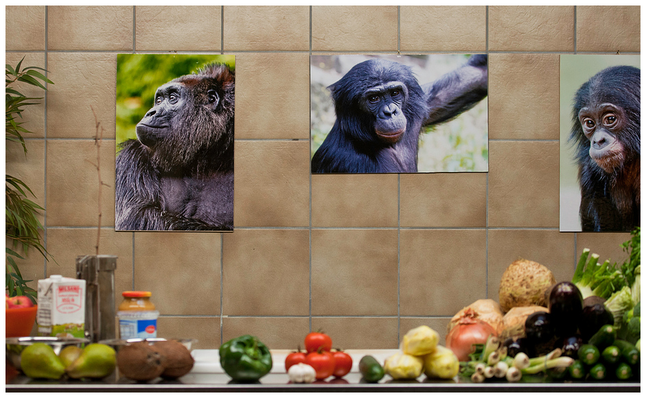In der Affen Küche