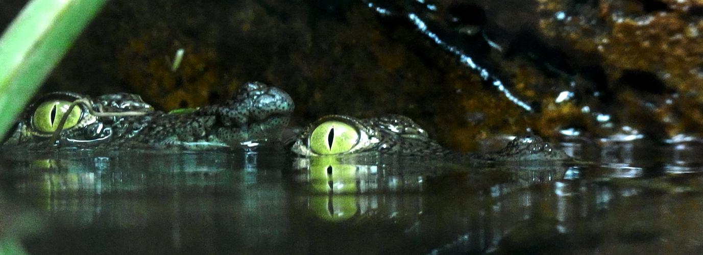 In der Bar zum Krokodil