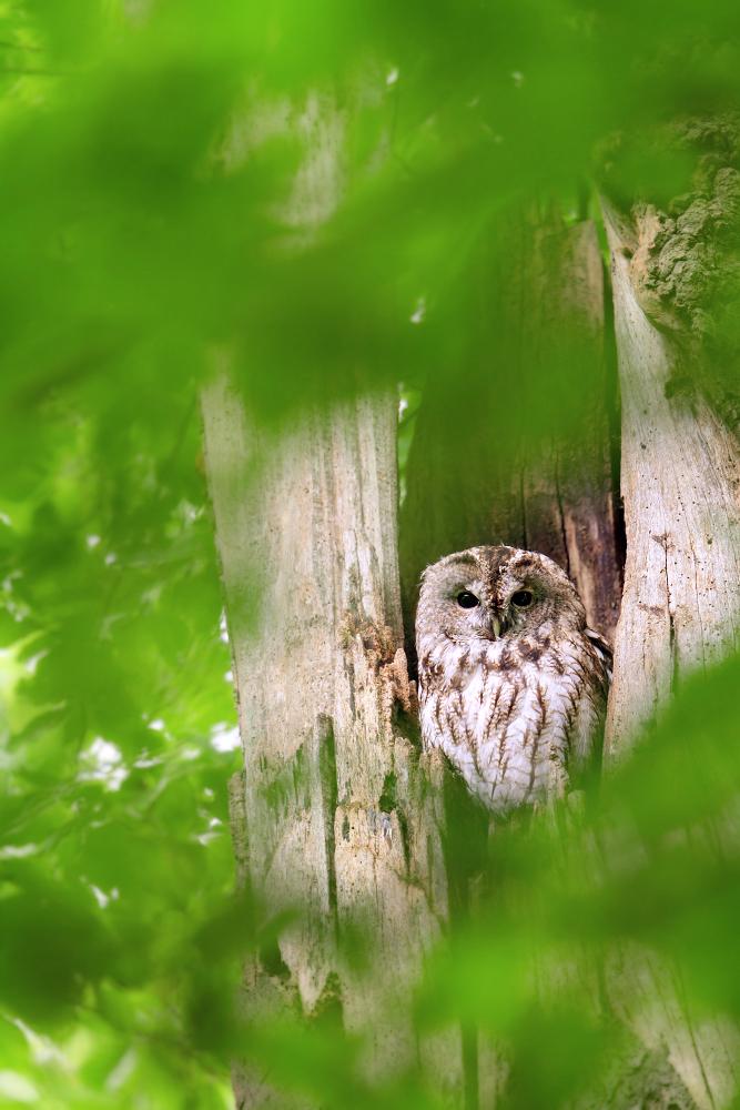 ~ In der Baumhöhle ~