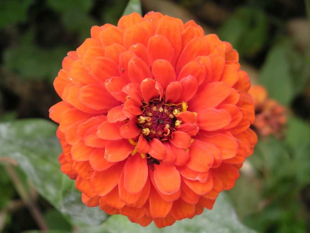 In der Blüte des Lebens