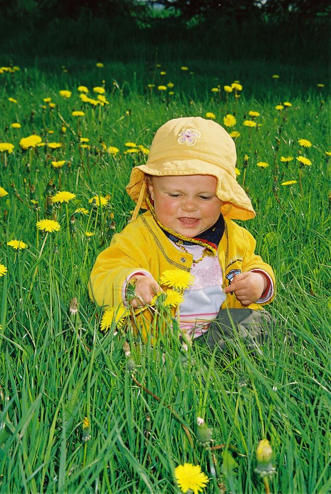In der Blumenwiese