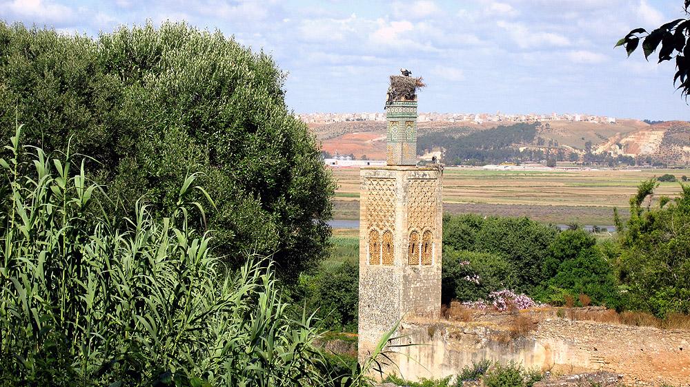 In der Chellah von Rabat