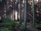 In der Dresdener Heide 2