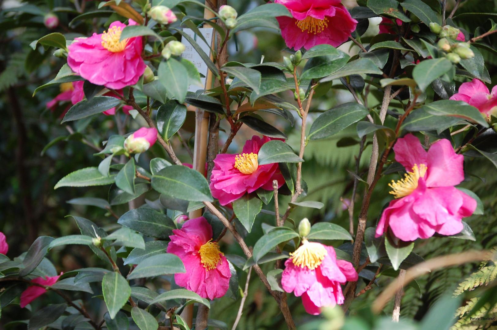 In der Flora