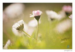 In der Frühlingswiese