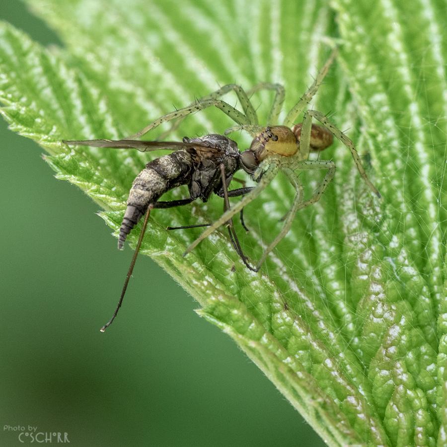 In der Größe kann ich sogar eine mordende Spinne fotografieren und anschauen ;-)