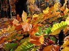 In der Herbstsonne