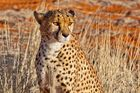 ...in der Kalahari
