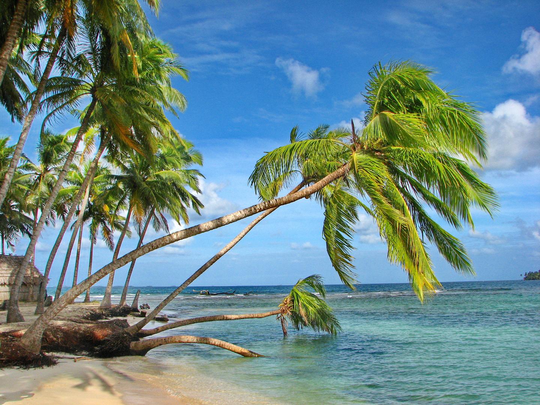 in der karibik foto bild natur kreativ natur palmen. Black Bedroom Furniture Sets. Home Design Ideas