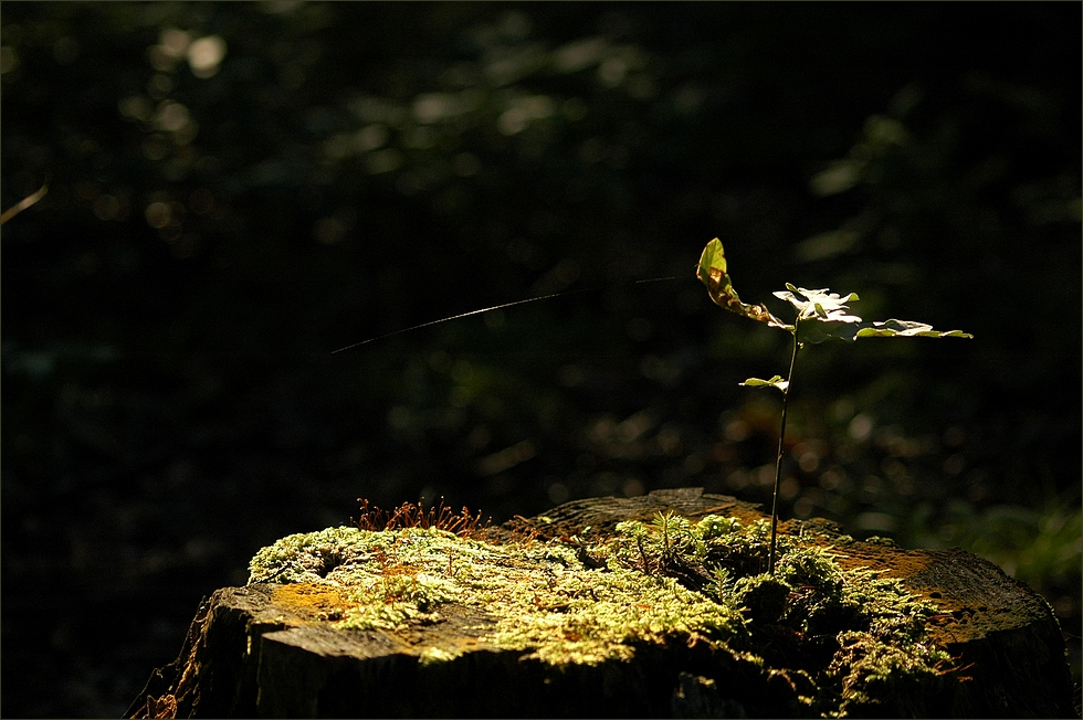 In der lebendigen Natur.....