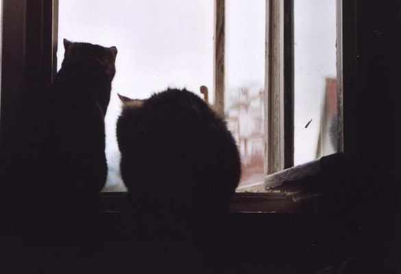 in der nacht sind alle katzen grau