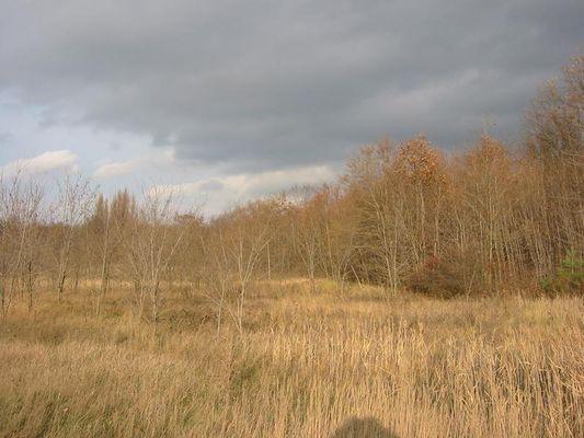 In der Nähe von Sandersdorf bei Bitterfeld im November