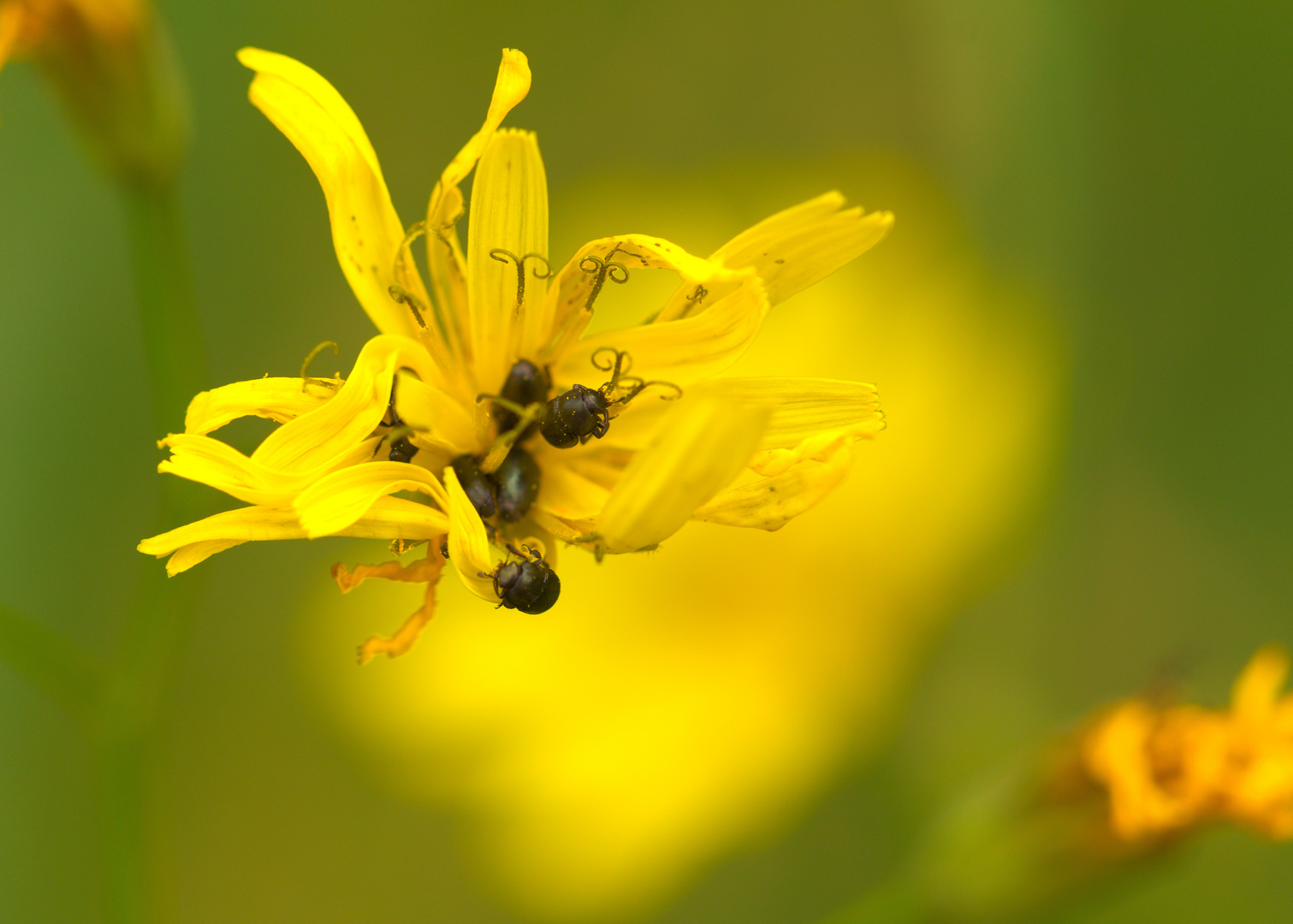 In der Pollenwirtschaft...