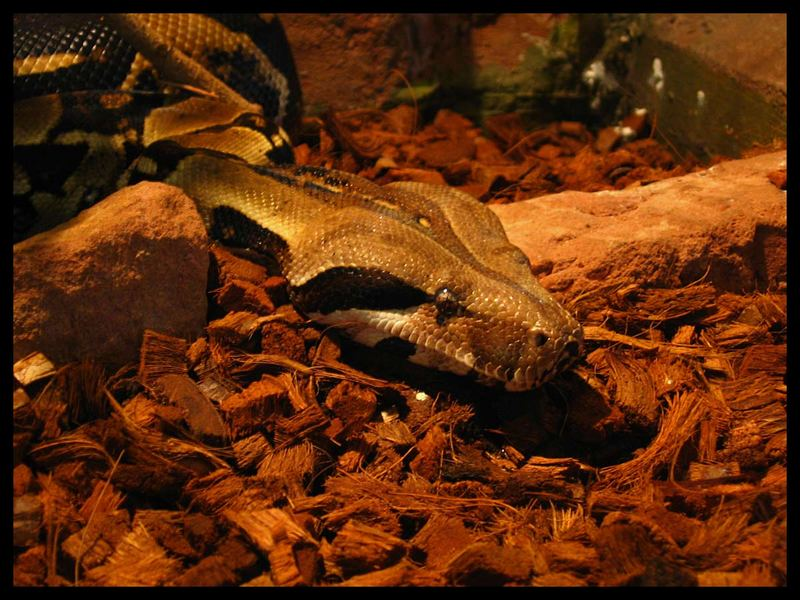 In der Schlangengrube .....