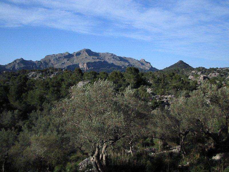 In der Serra de Tramuntana