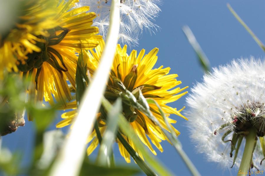 In der Sonne auf der Wiese liegen...