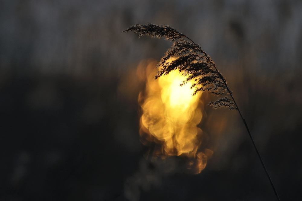in der untergehenden Sonne