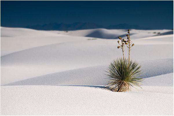 In der Weite der Wüste (Reloaded)