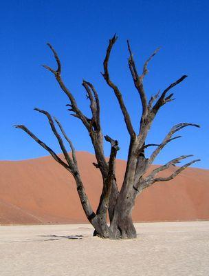 ,,,,,in der Wüste Namib......