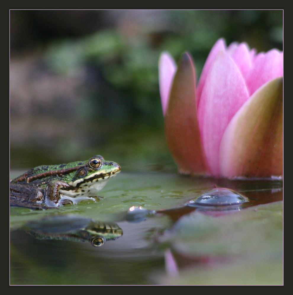 In des Froschkönigs Garten