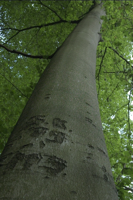in die Rinde eines Baumes
