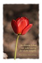 In diesem Leben ... (Rote Tulpe)