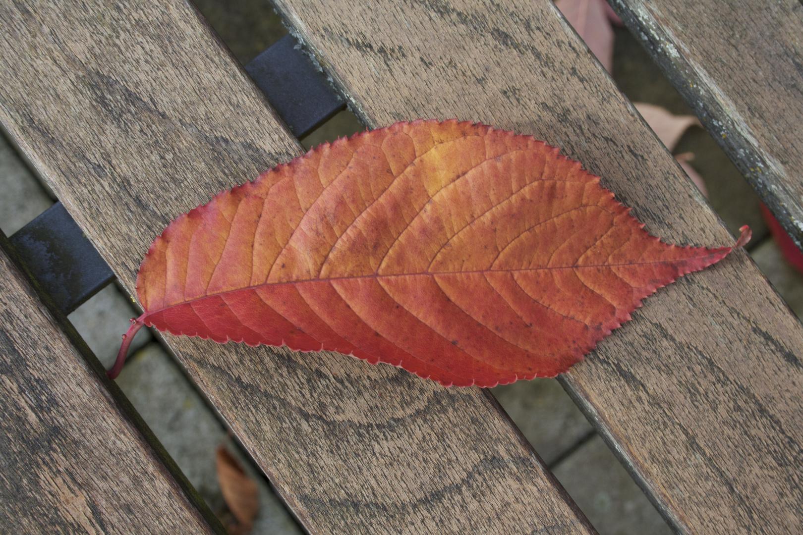 In diesem Sinne: Willkommen im Herbst