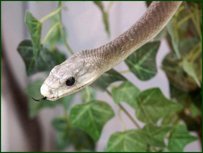 in einer Schlangenfarm....
