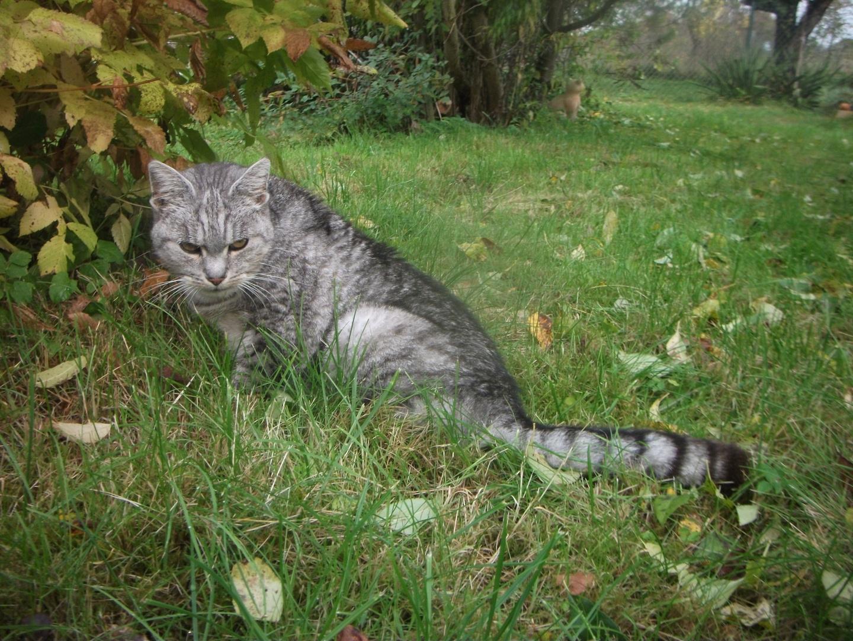 In Erinnerung an meine liebe Katze Mietze