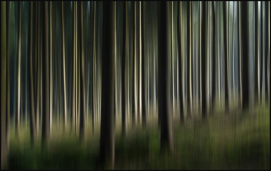 in fichtenwald 2