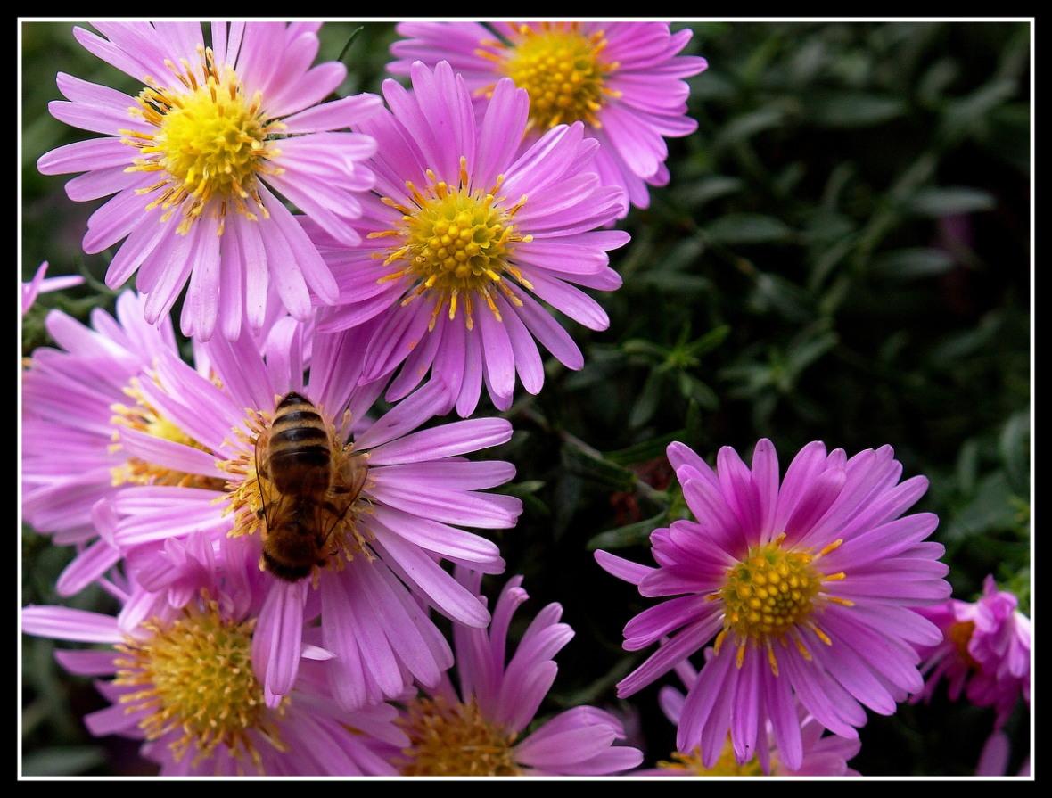 ... in flowers