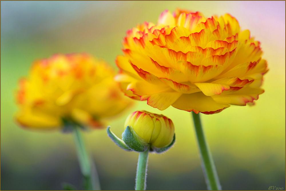 #  in Frühlingsfarben..II