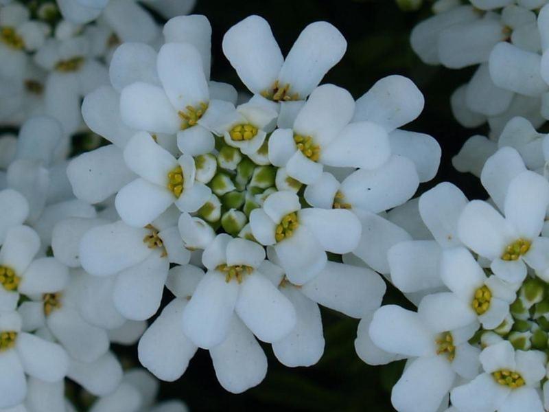 in full bloom 1