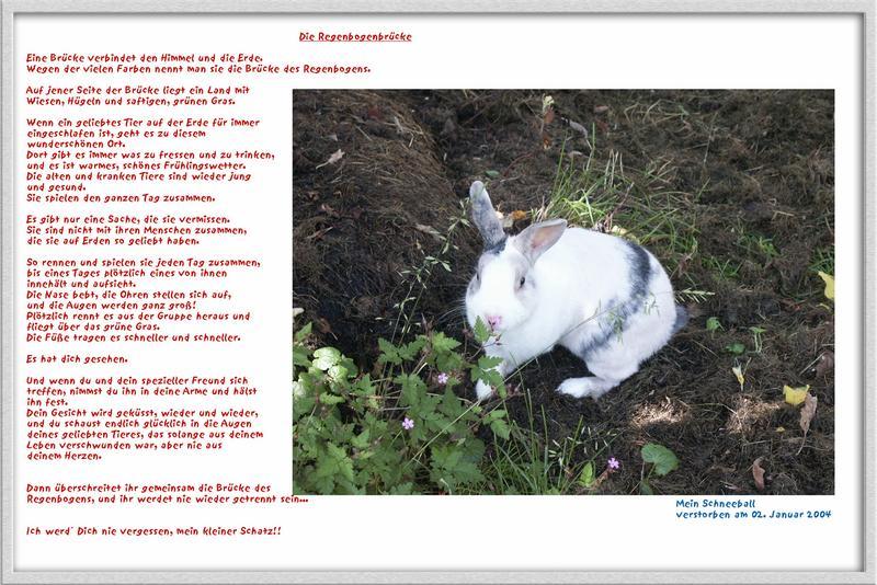 In Gedenken mein kleiner Hase...