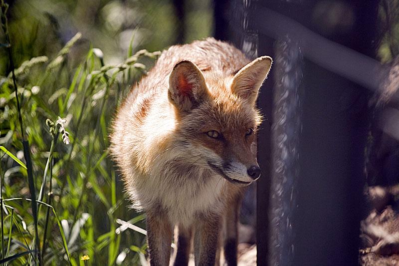 In Gefangenschaft..
