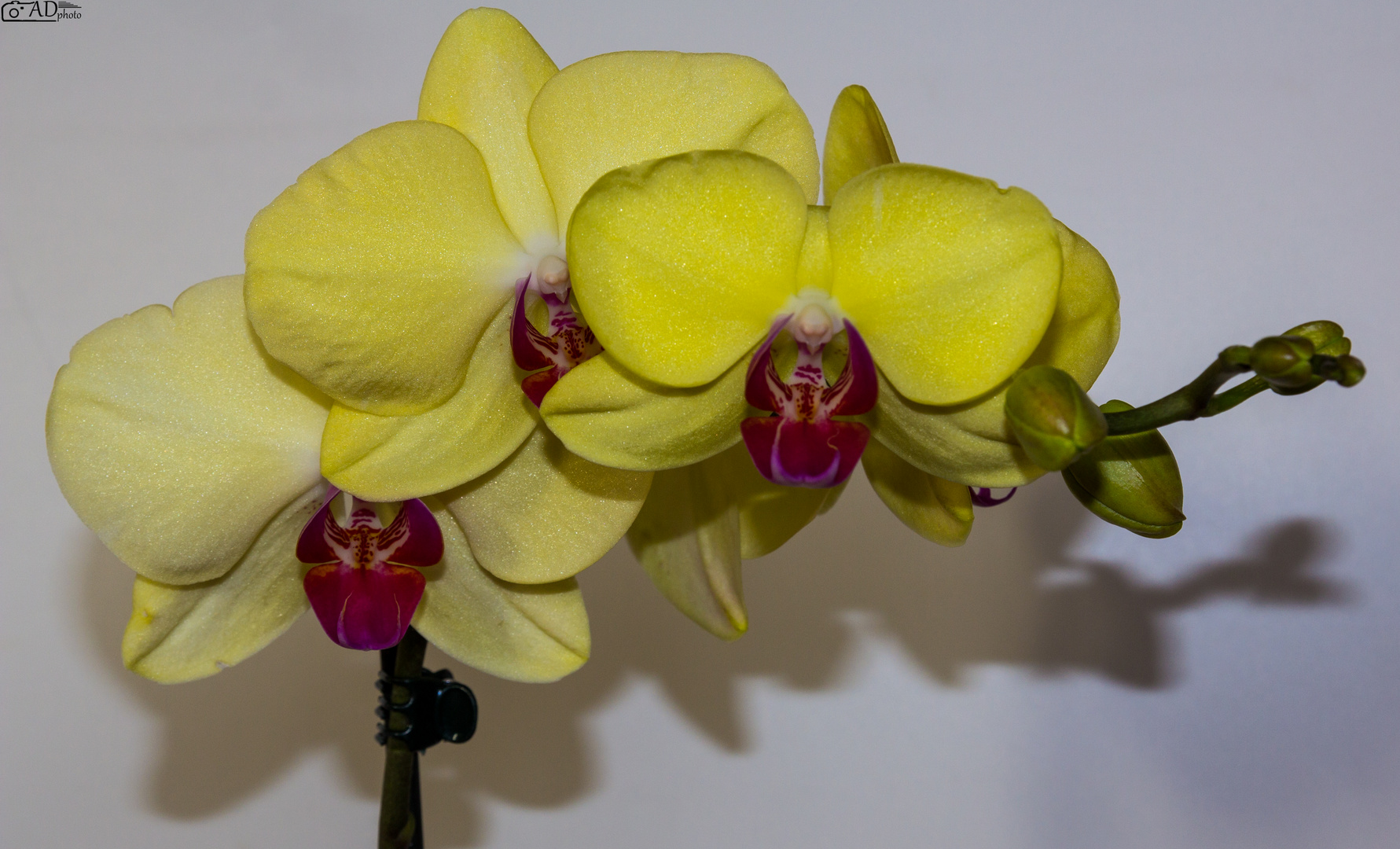 In Gelb