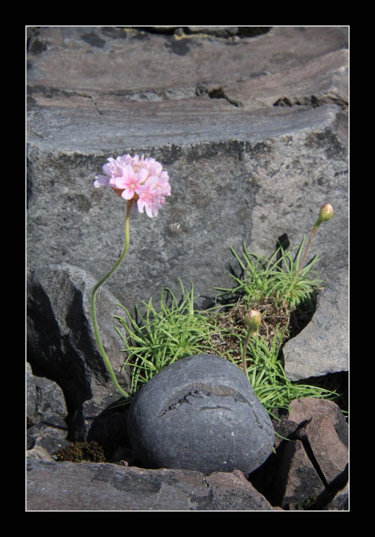 in jedem Steine kann ein Troll stecken!