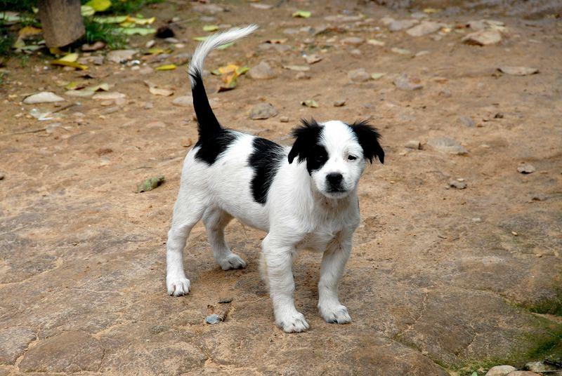 In Laos sind die Hunde so friedvoll wie die Menschen!