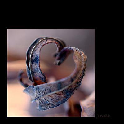 ... in Liebe ...